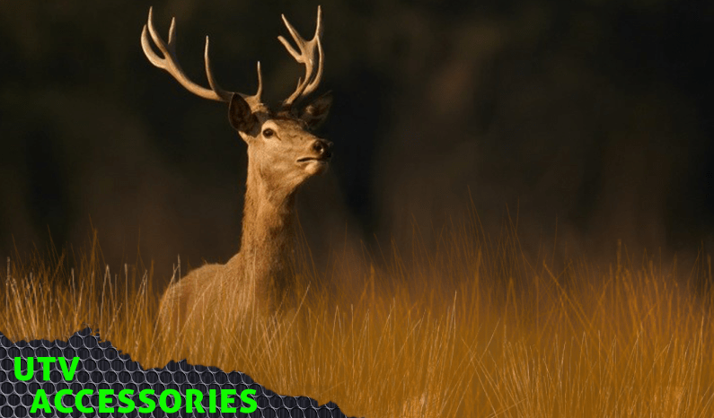 How to Set Up for an Early Morning Hunt in Your Side-By-Side